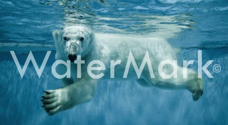 Добавление водяных знаков к изображениям (Watermark WordPress)